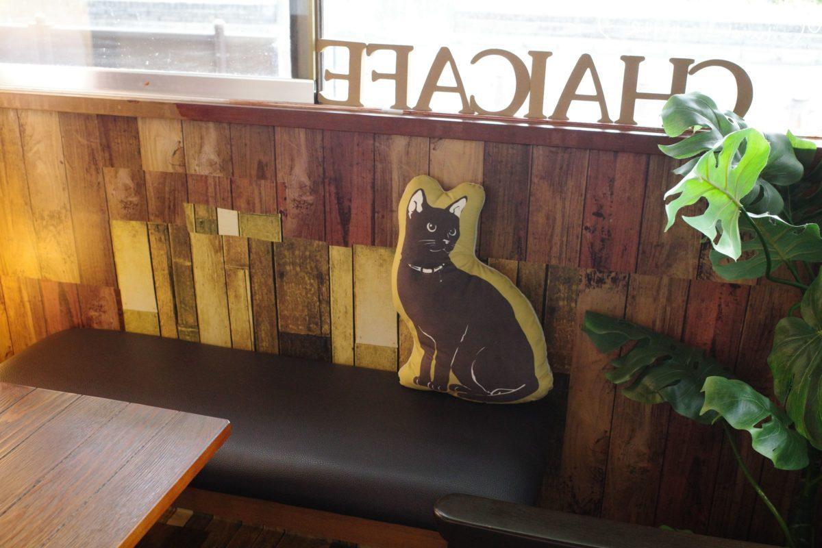 チャイカフェ 猫